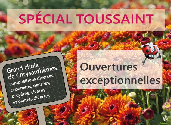 Toussaint <br> Ouvertures exceptionnelles des Serres et jardineries